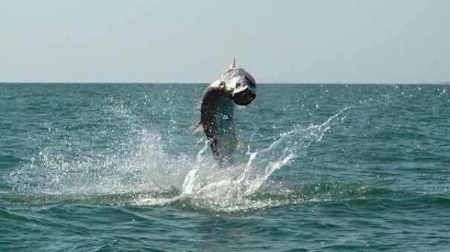 Tarpon Fishing Florida Keys