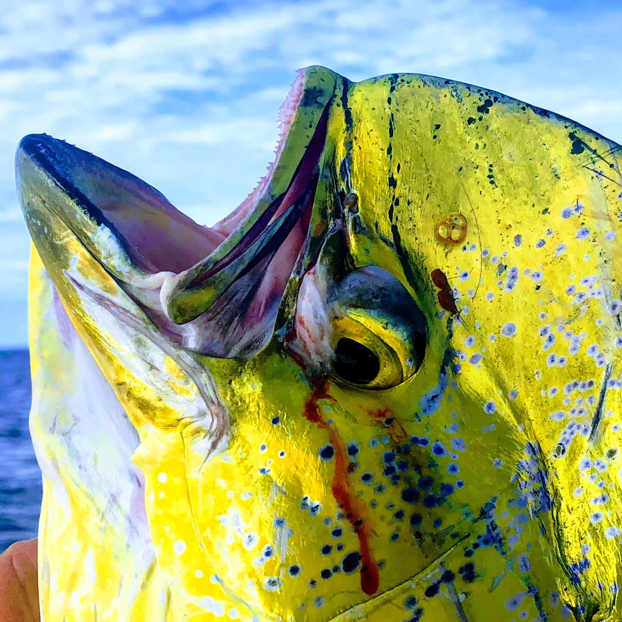 Angler's Choice Fishing Report